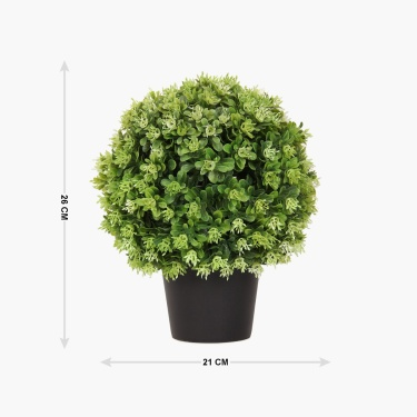 Green Bean Ball Plastic Pot