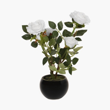Sachi Potted Rose in Ceramic Pot