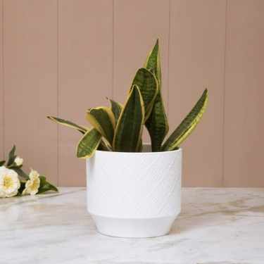 MADISON-MACKENZIE Textured Round Planter